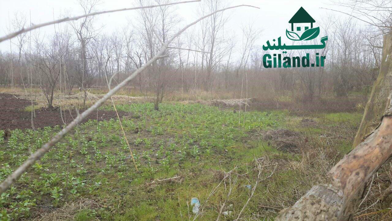 خرید زمین باغ روستایی