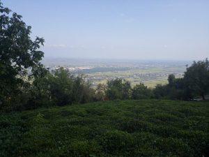 خرید زمین جنگلی در گیلان