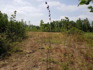 فروش زمین برای احداث باغ با نسق ثبتی